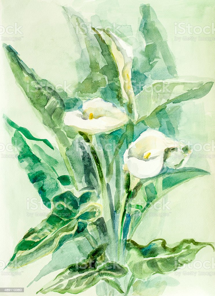 Calla lily flowers - watercolor vector art illustration