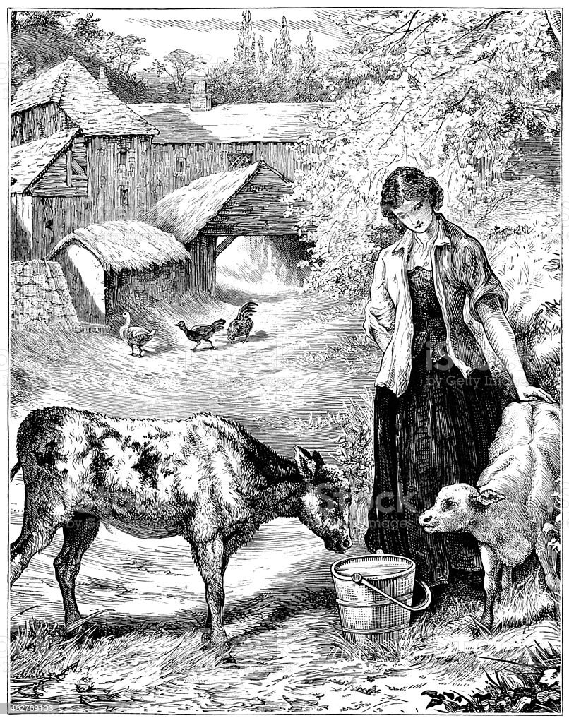 Calves being fed in a farmyard vector art illustration