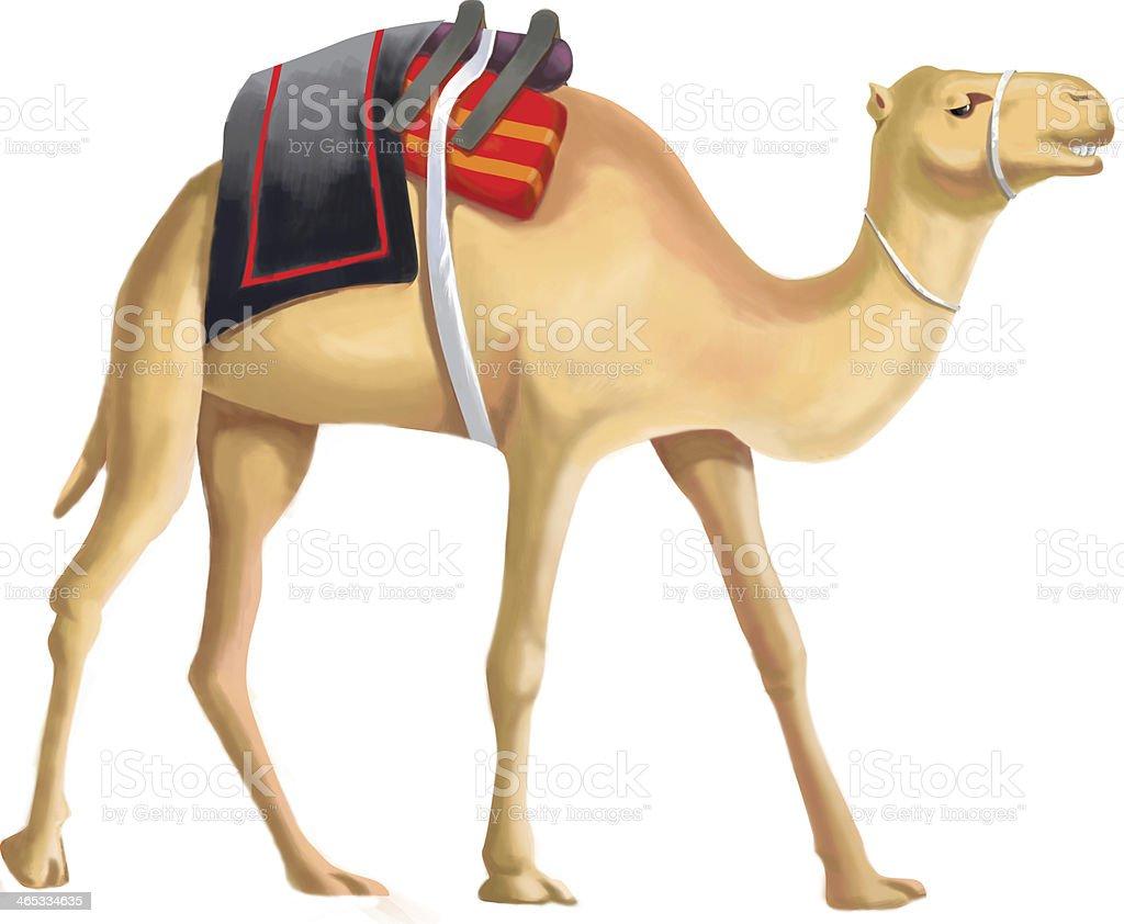 camel vector art illustration