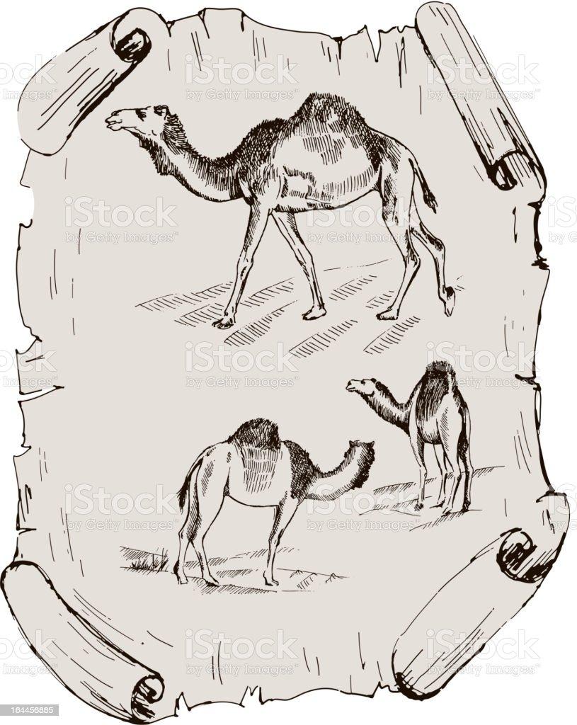 camel. zoo royalty-free stock vector art
