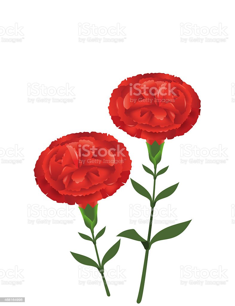 Carnation. Red. vector art illustration