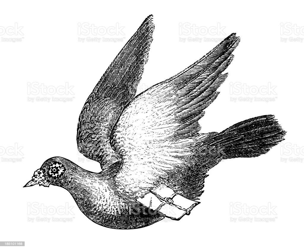 Carrier pigeon vector art illustration