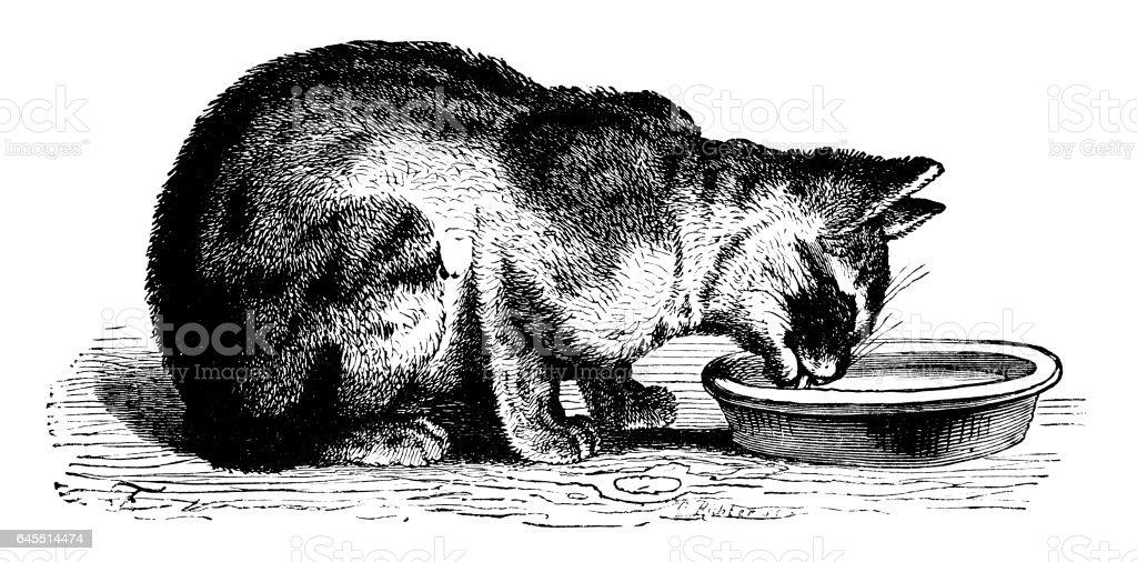 Cat lapping at a dish of milk vector art illustration