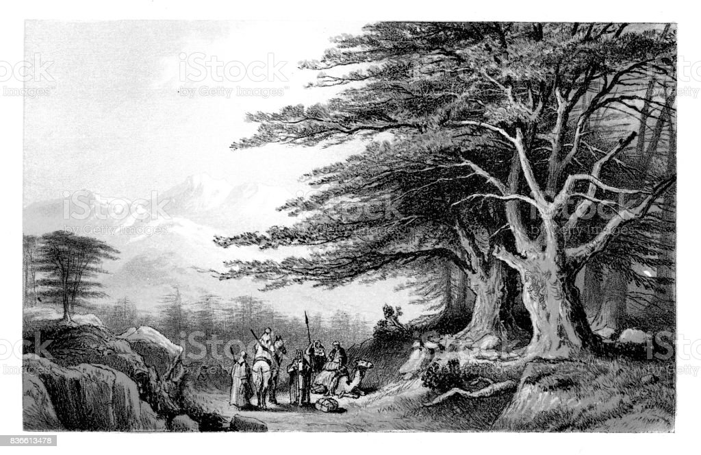 Cedars of Lebanon vector art illustration