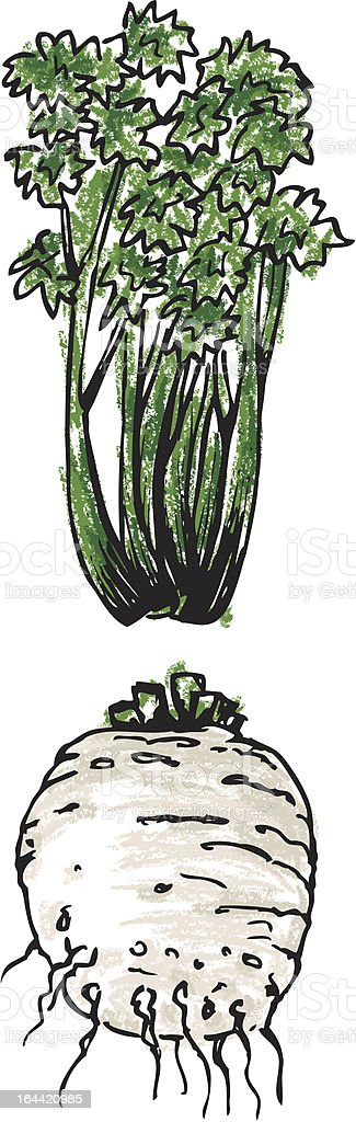 Celery - root and leaves royalty-free stock vector art