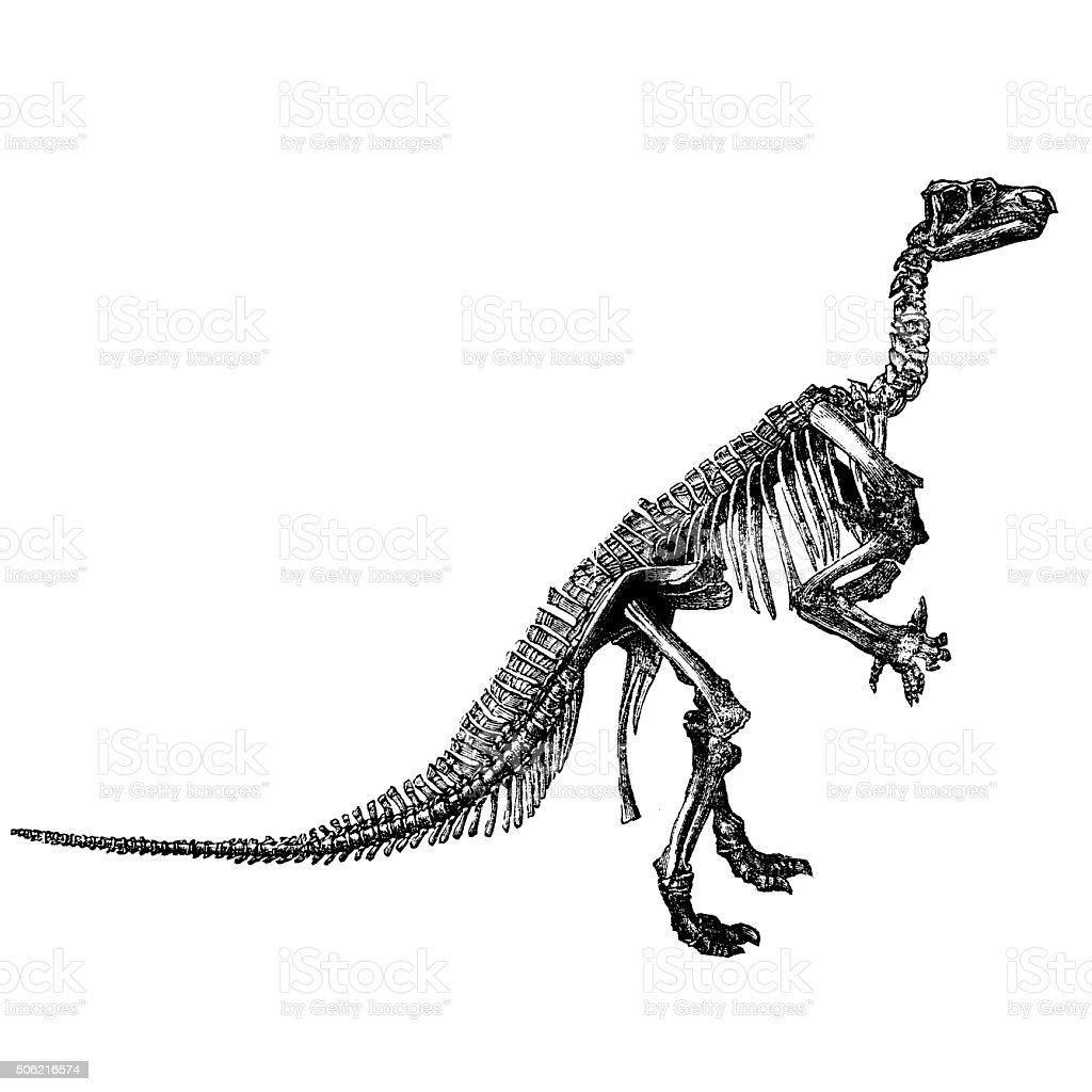 Ceratosaurus vector art illustration