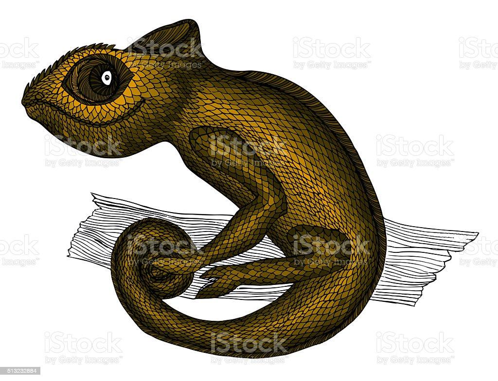 Chameleon.Profile Lizard. Hand drawn. vector art illustration
