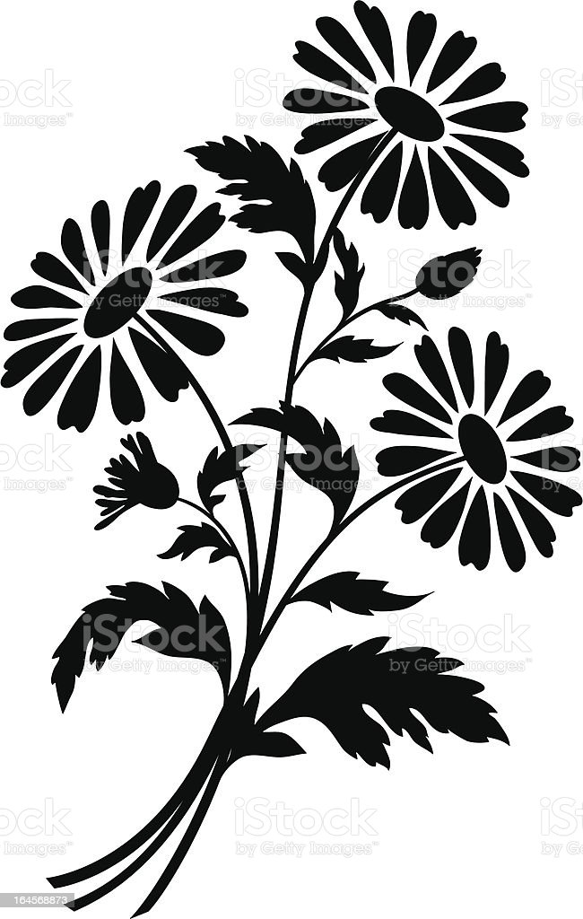 Chamomile flowers, silhouettes vector art illustration