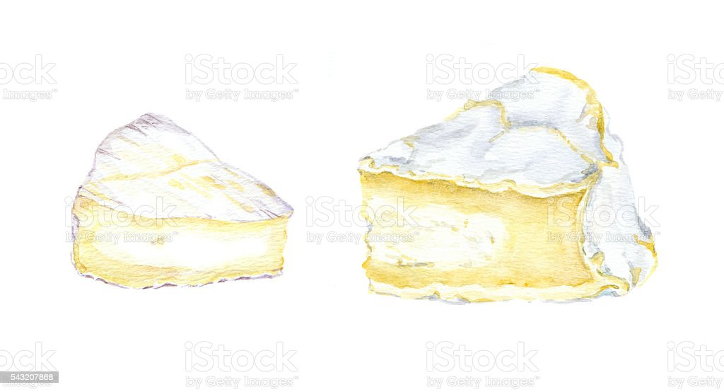 Cheese brie. Watercolour vector art illustration