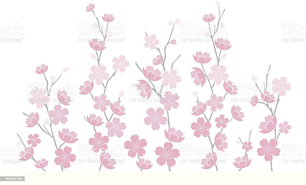Cherry Blossoms Vector 3 royalty-free stock vector art