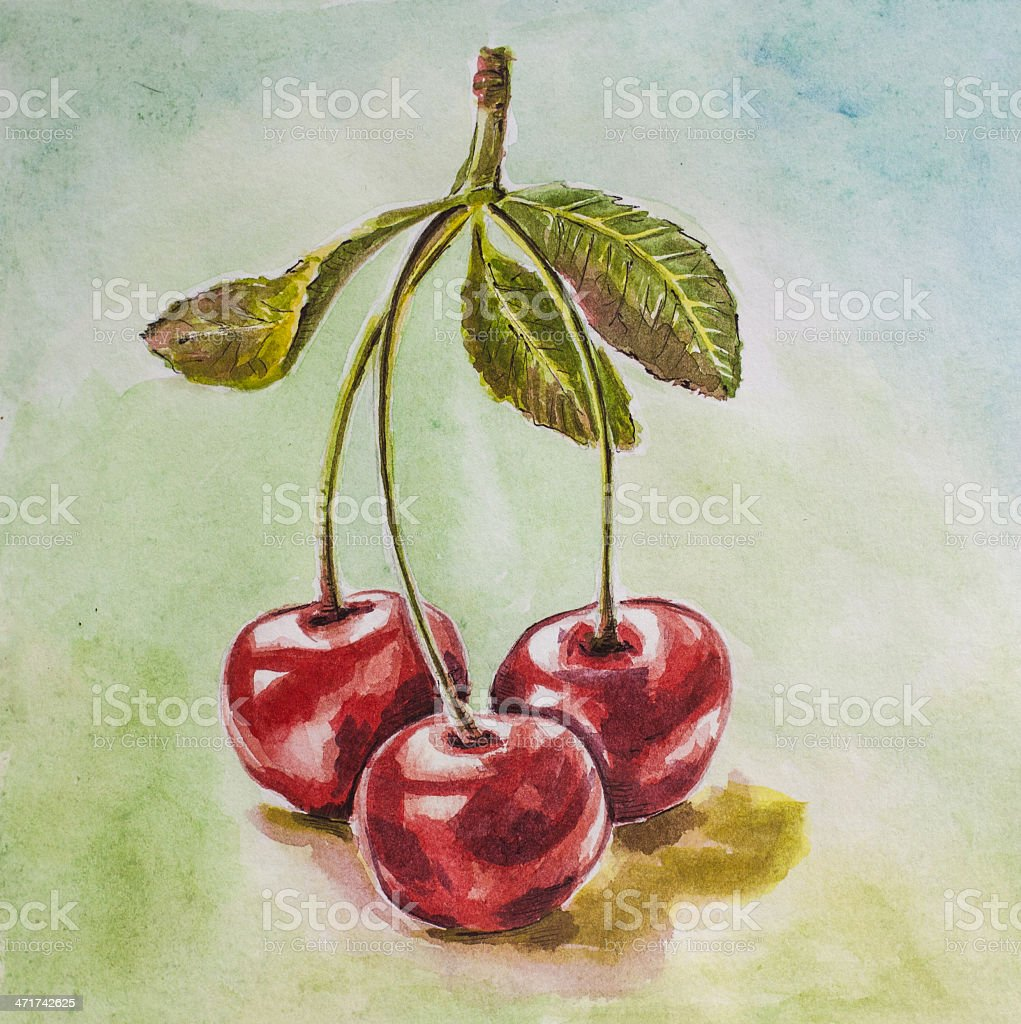 cherry watercolor royalty-free stock vector art