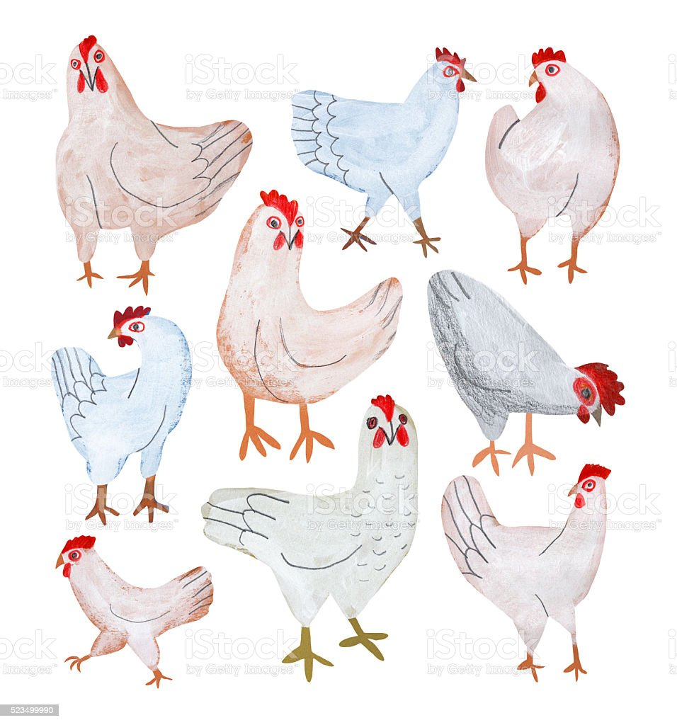 Chickens isolated on white vector art illustration