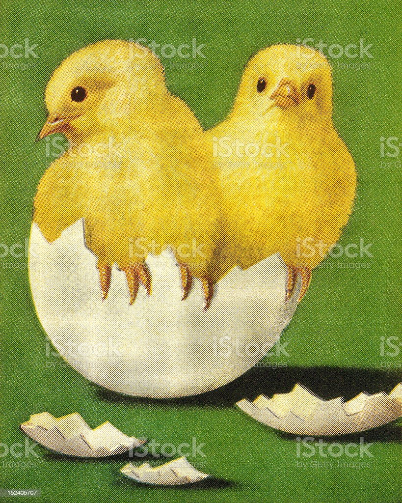 Chicks Coming Out of Shell royalty-free stock vector art