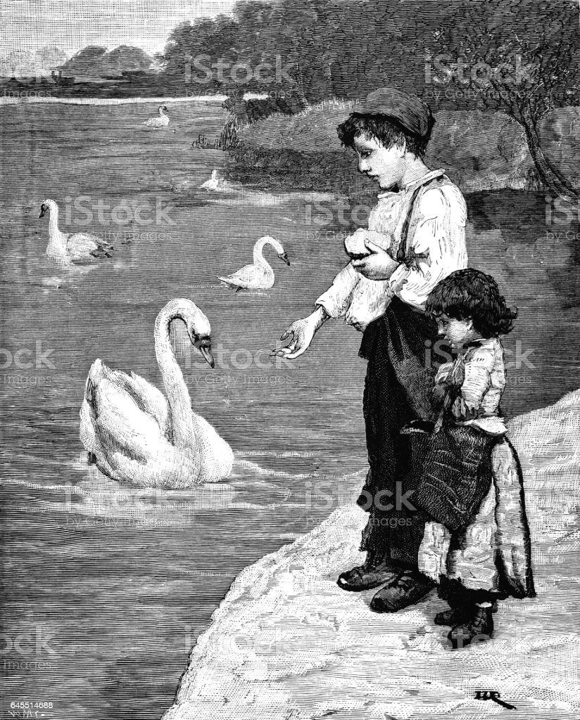 Children feeding swans (Victorian engraving) vector art illustration