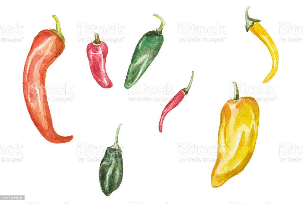 Chilli - Watercolour illustration vector art illustration