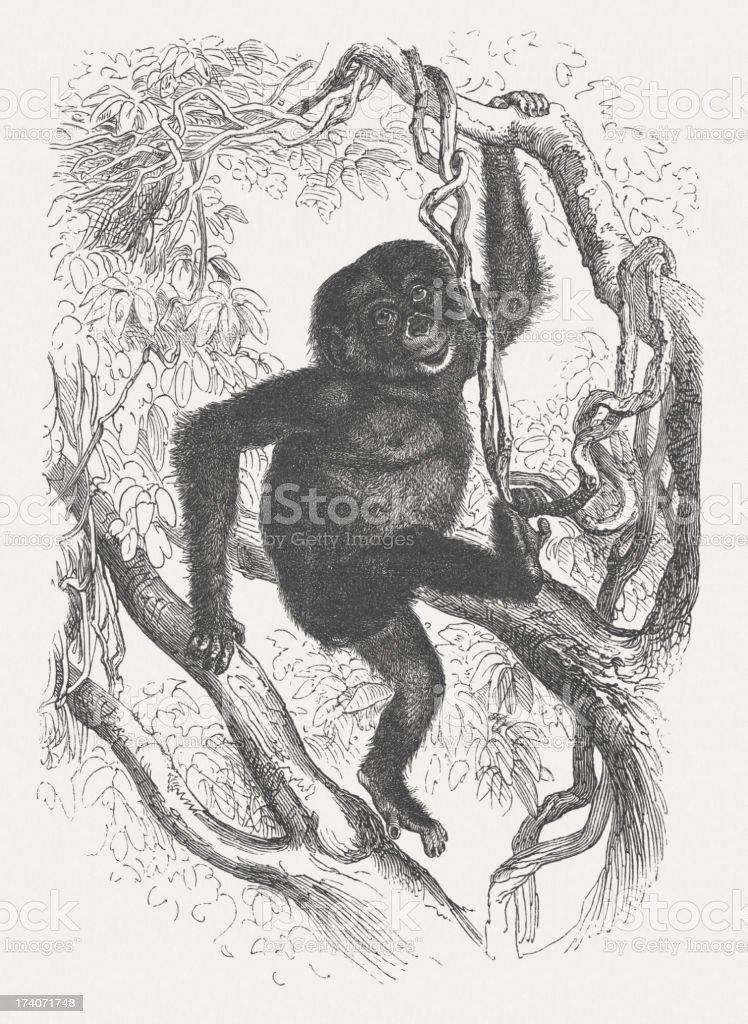 Chimpanzee (Pan troglodytes), wood engraving royalty-free stock vector art