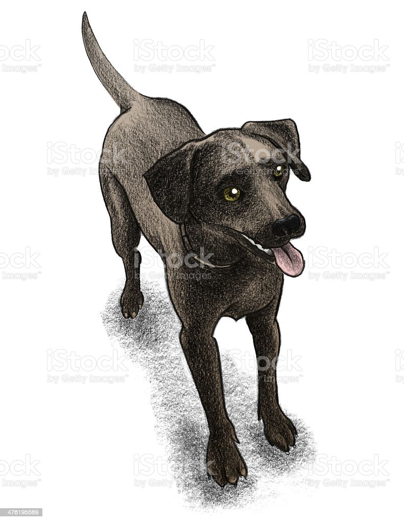 Chocolate lab illustration royalty-free stock vector art