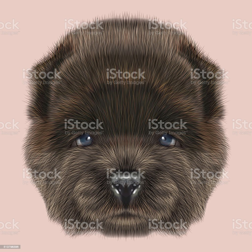 Chow Chow Puppy portrait vector art illustration