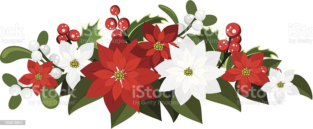 Christmas bouquet with poinsettias, holly and mistletoe. Vector illustration. royalty-free stock vector art