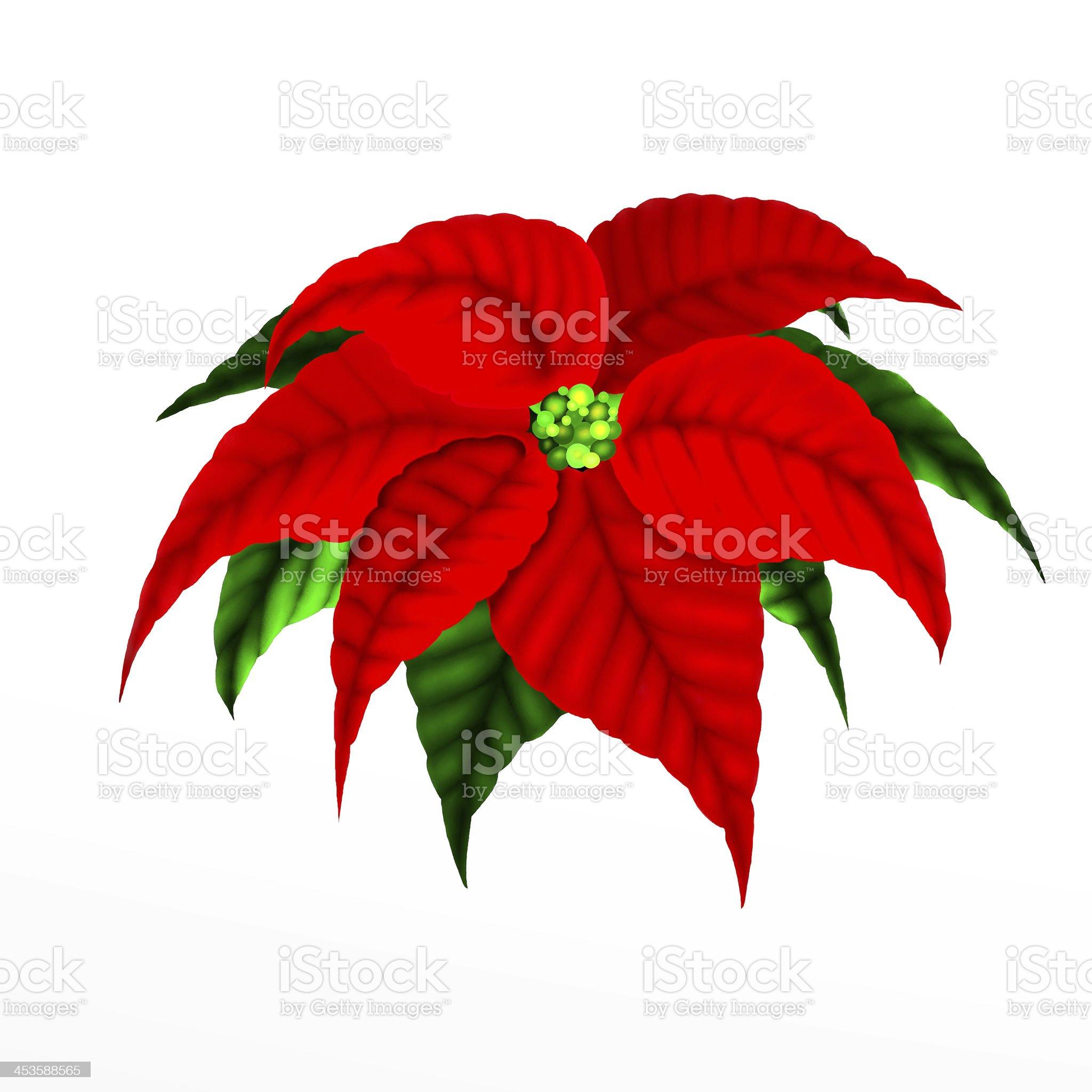 Christmas Poinsettia Flower royalty-free stock vector art