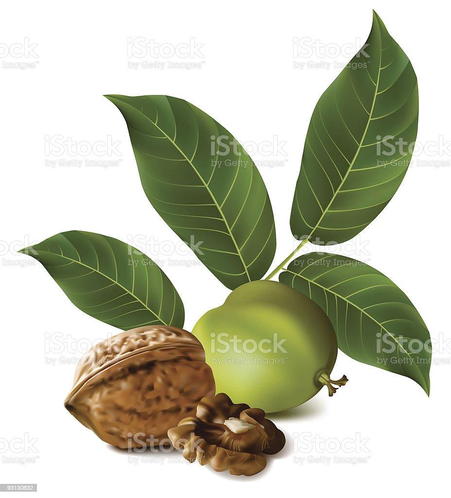 Circassian walnuts. vector art illustration