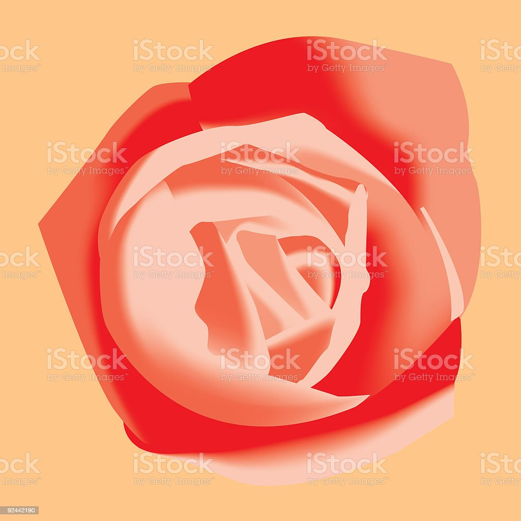 Close up of Red Rose - Vector royalty-free stock vector art