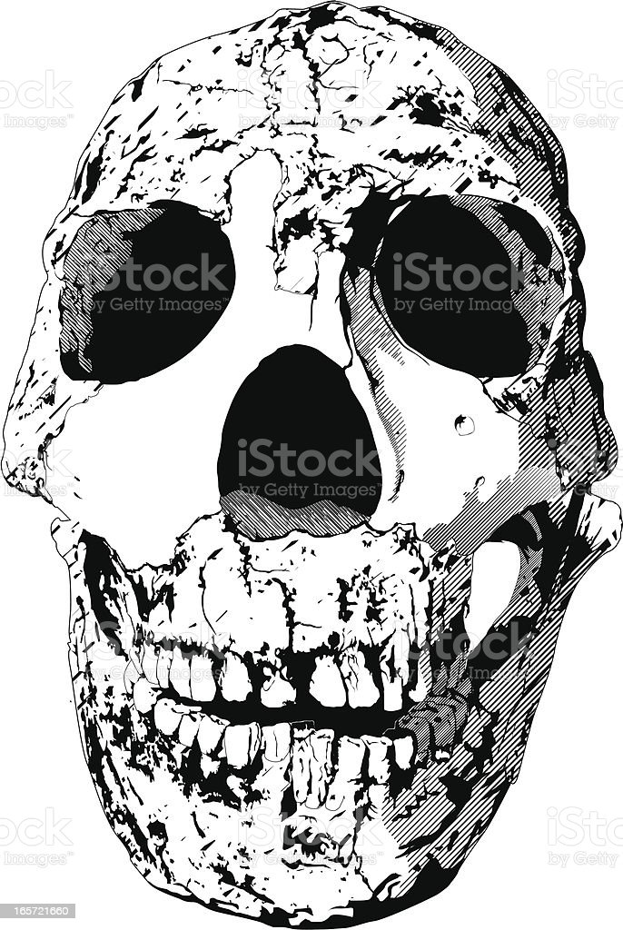Close-up of a cracked human skull royalty-free stock vector art