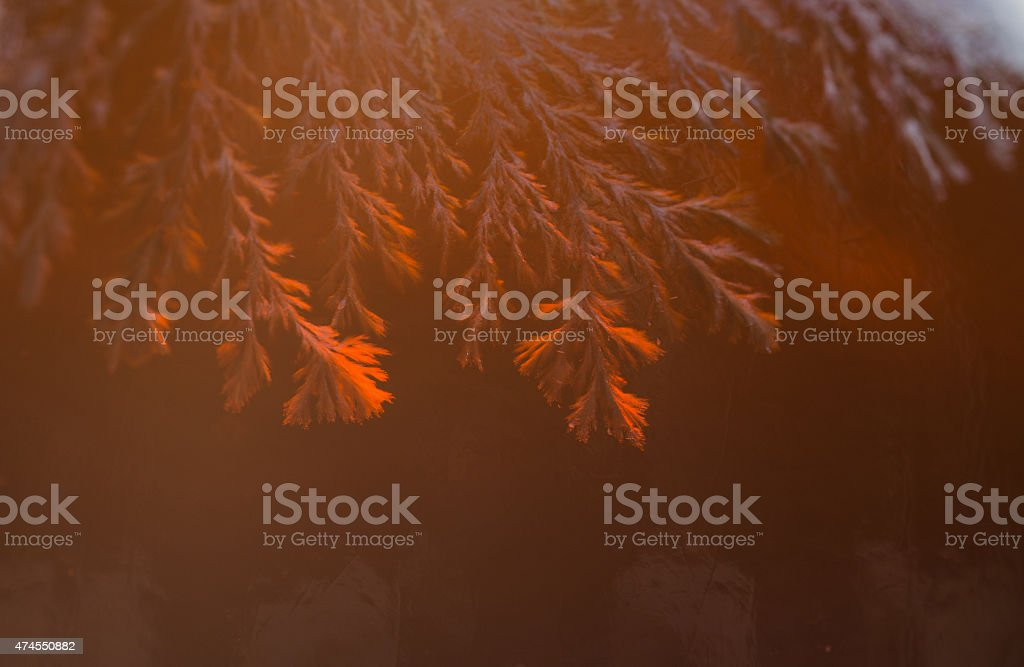 Close-up the mold vector art illustration