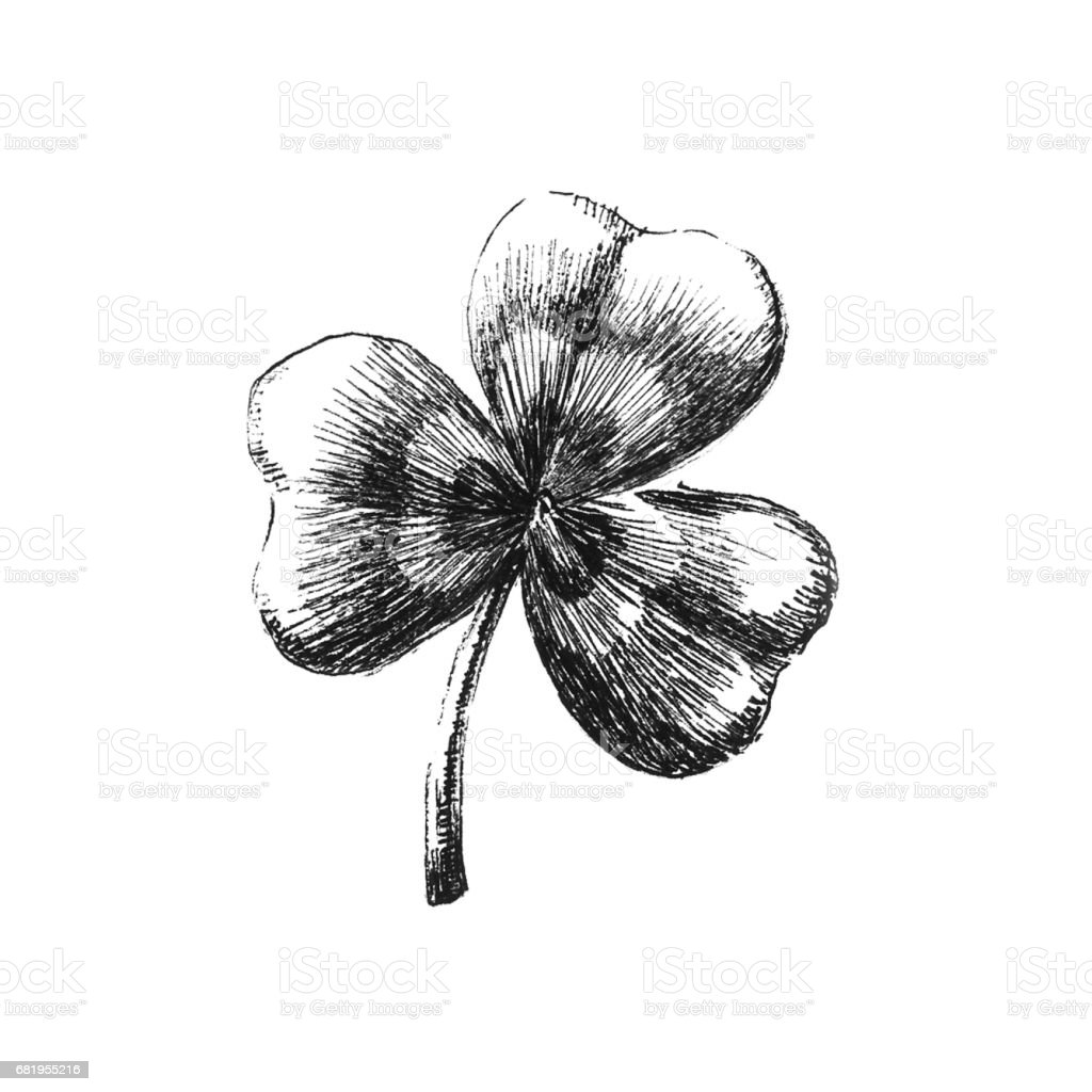 Clover leaf. Hand drawn vector art illustration