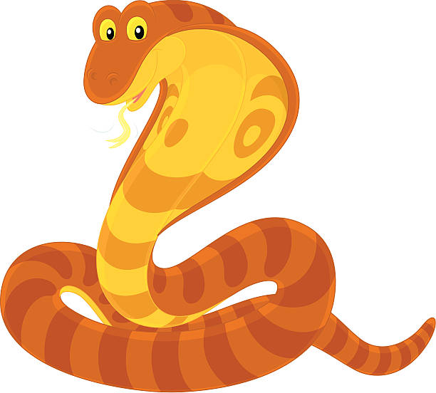 King Cobra Clip Art, Vector Images & Illustrations - iStock