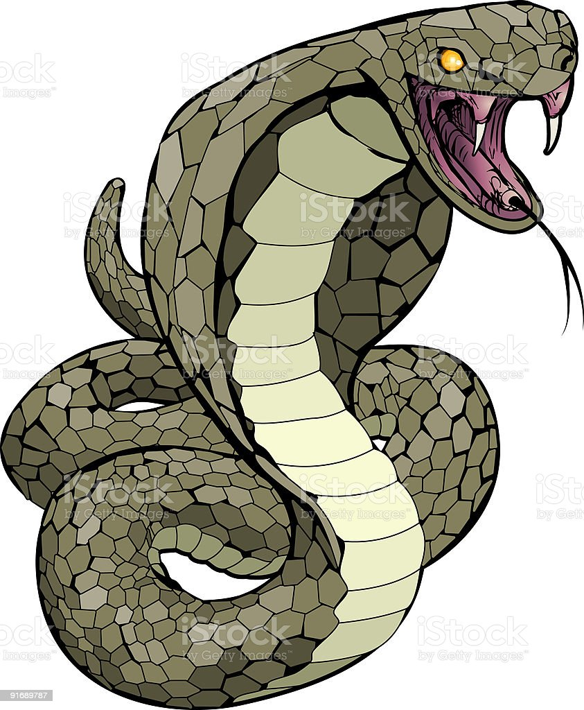 Cobra snake about to strike illustration royalty-free stock vector art