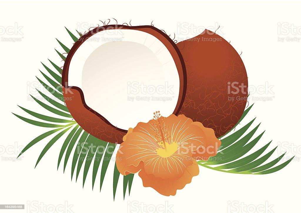 Coconut royalty-free stock vector art