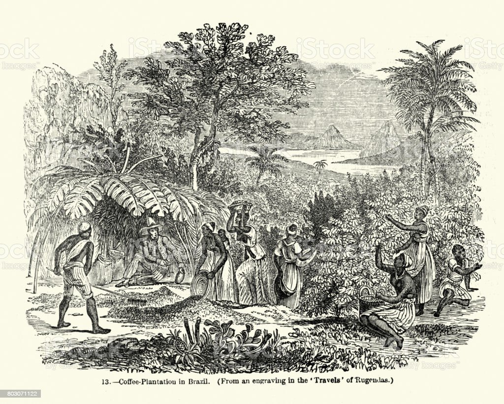 Coffee Plantation in Brazil, mid 19th Century vector art illustration