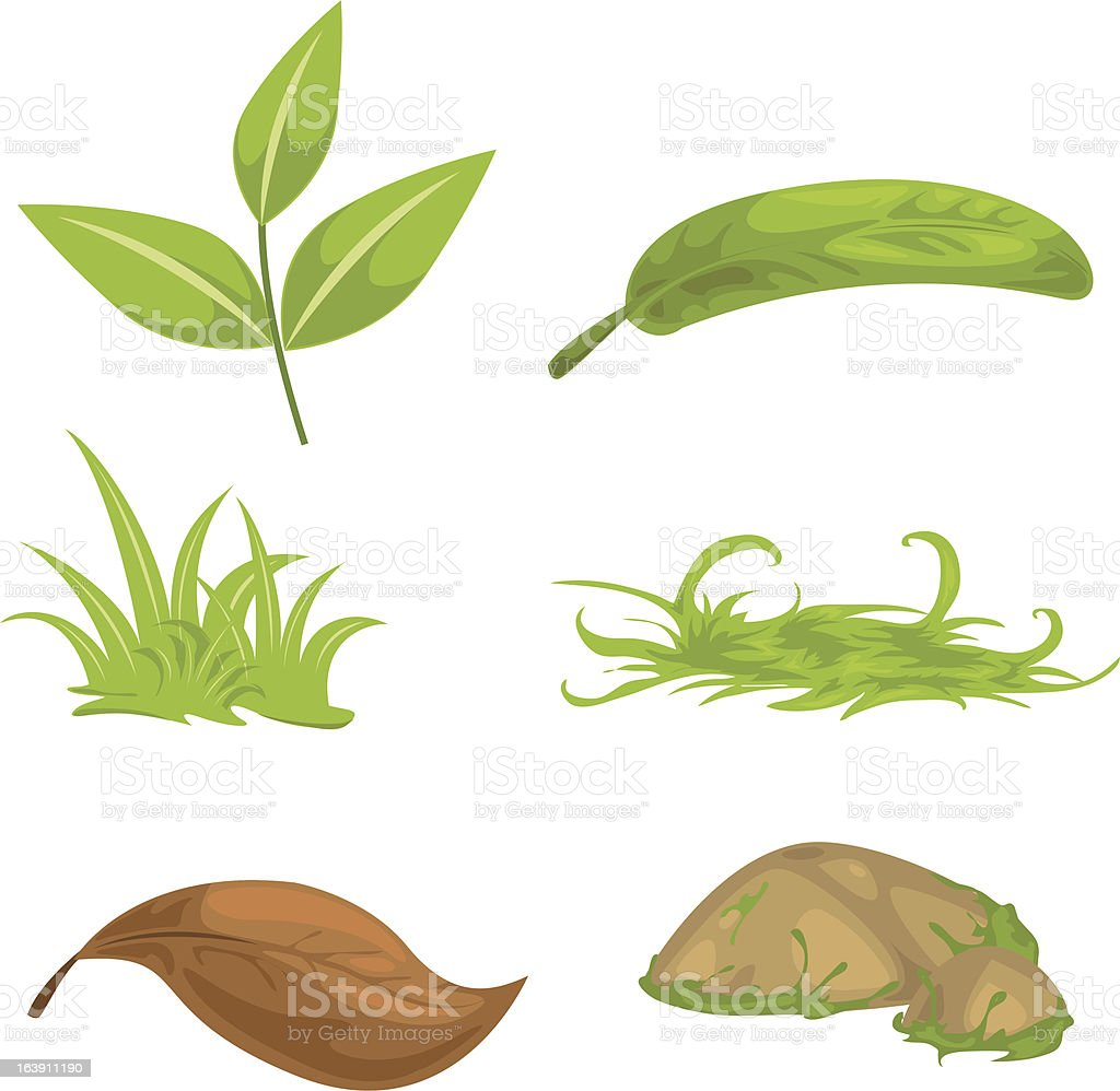 collection leaf and grass royalty-free stock vector art