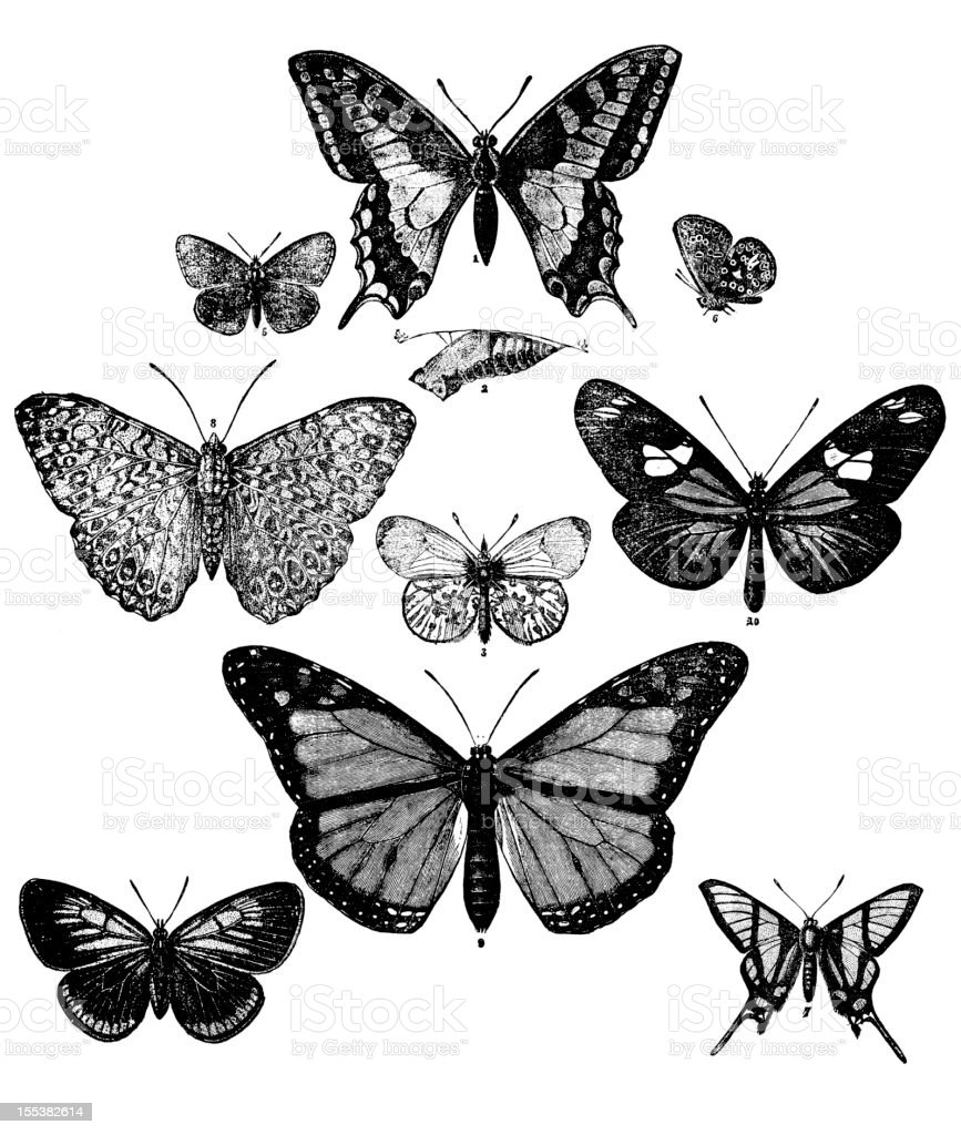 Collection of butterflies royalty-free stock vector art