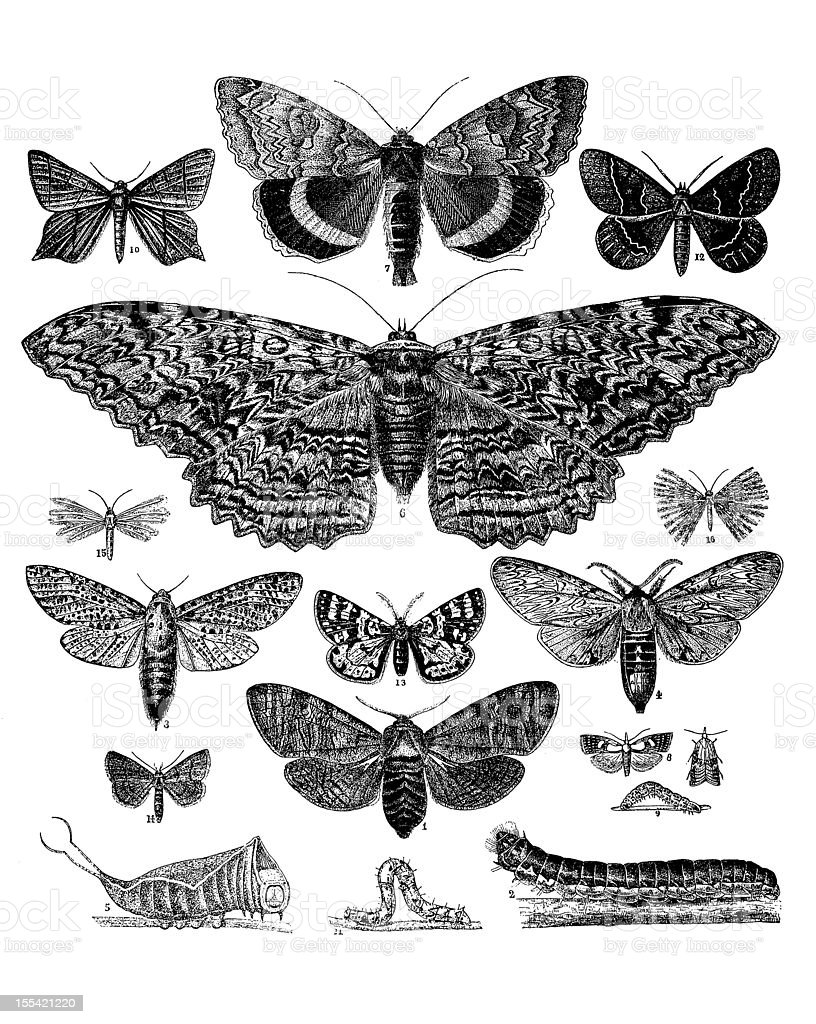 Collection of Butterflies, Moths and Caterpillars royalty-free stock vector art