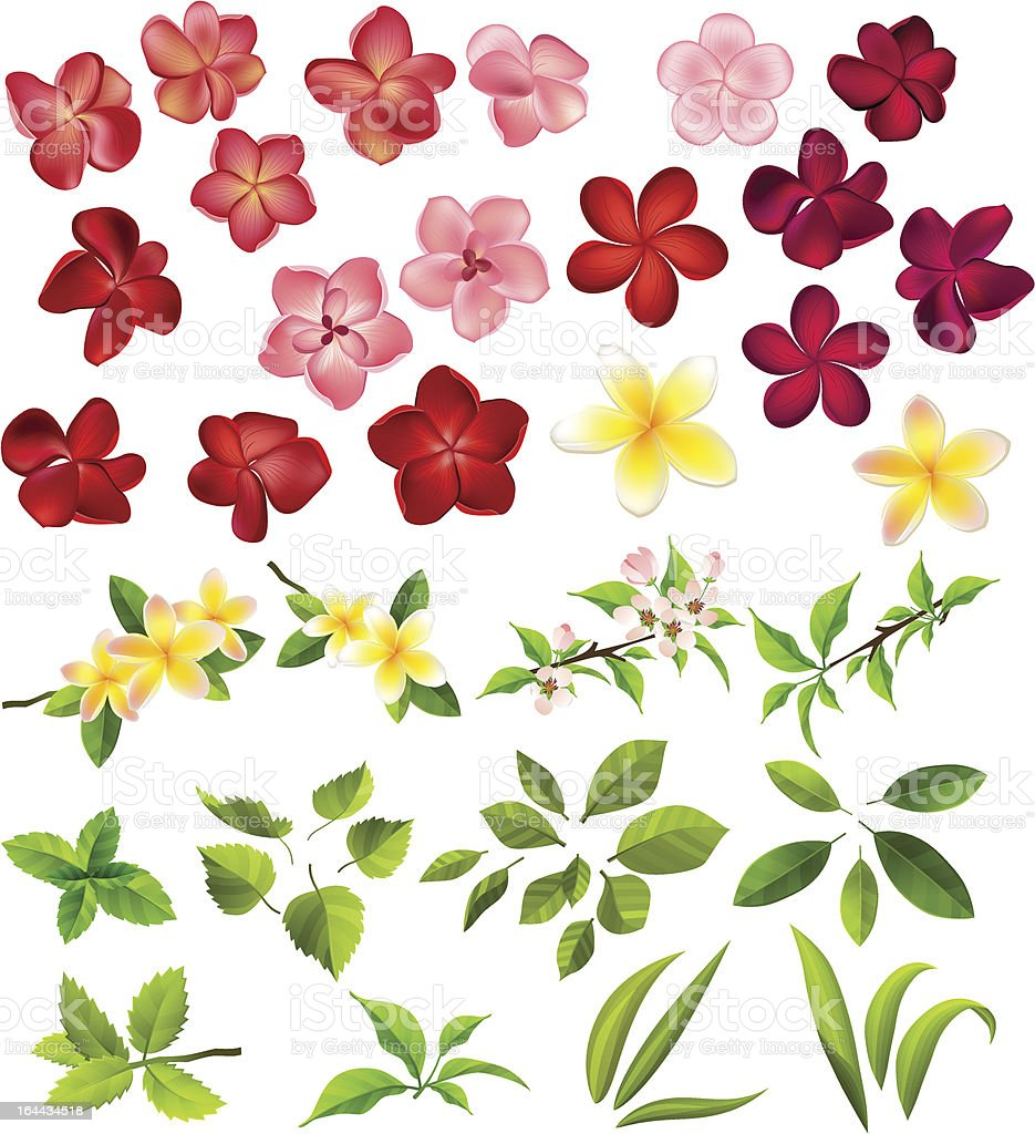 Collection of different flowers and leaves vector art illustration