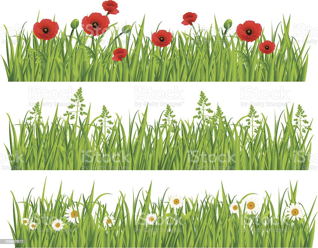 Collection of grass with daisies and poppies vector art illustration