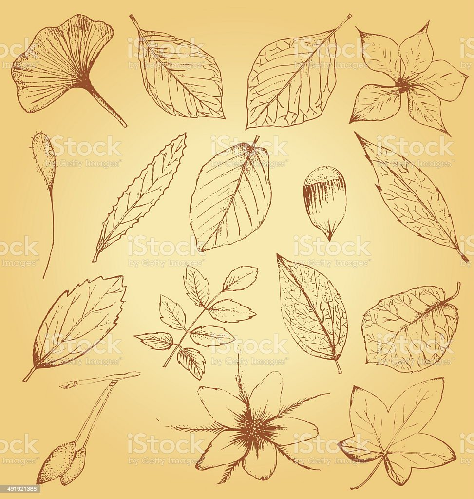 Collection of hand drawn plants, leaves vector art illustration