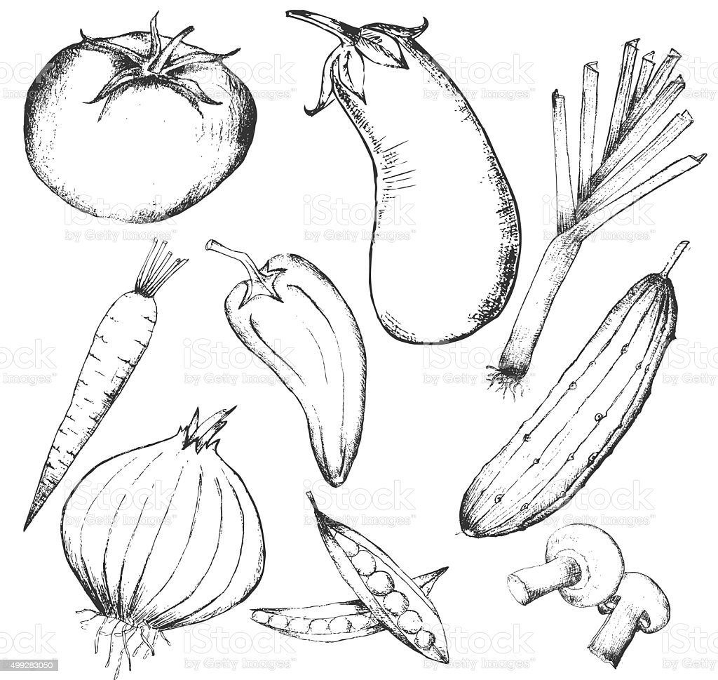 Collection of hand-drawn vegetables, vector illustration vector art illustration