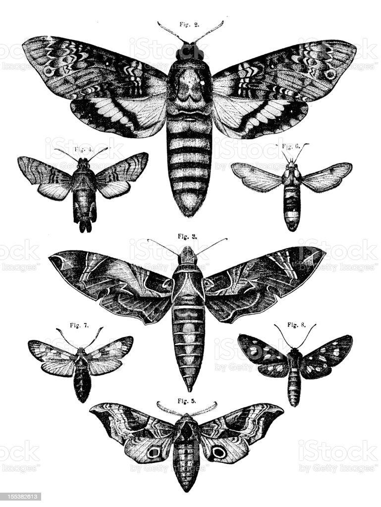 Collection of moths vector art illustration