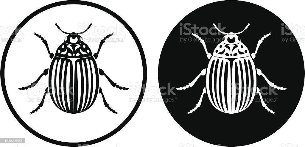 Colorado beetle vector art illustration