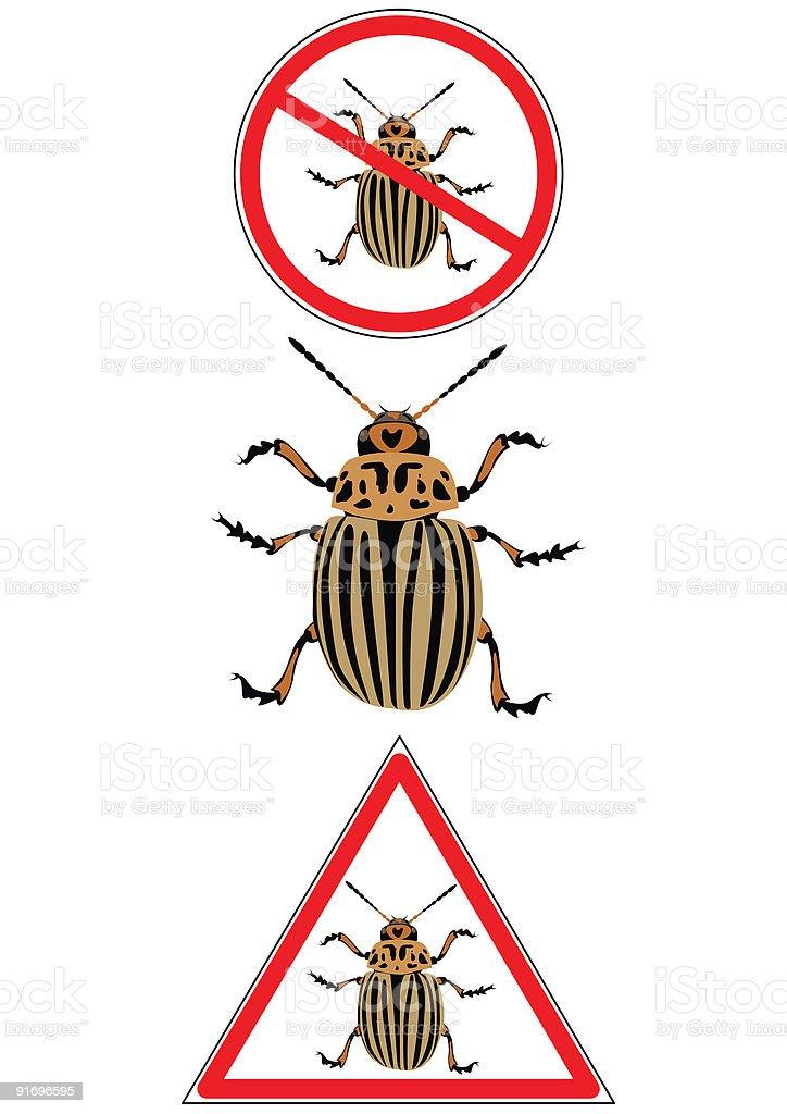 colorado potato beetle vector art illustration