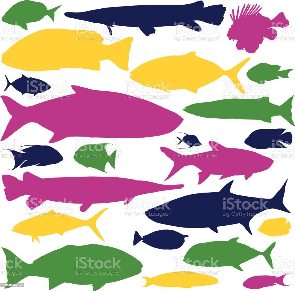 Colorful Fish vector art illustration
