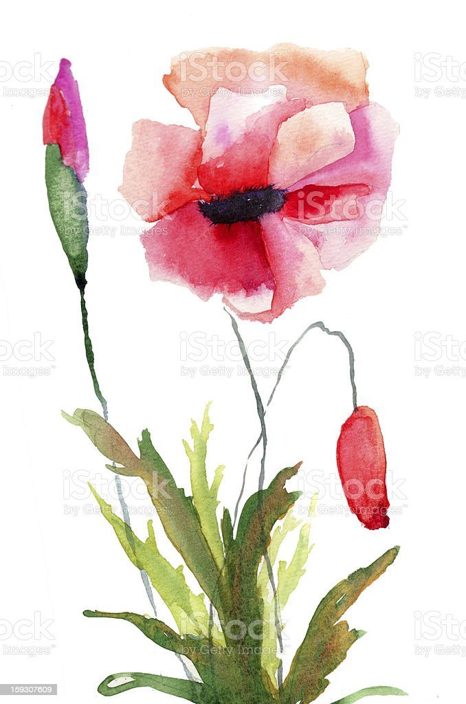 Colorful poppy flowers royalty-free stock vector art