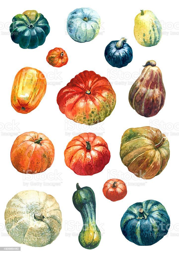 Colorful pumpkins vector art illustration