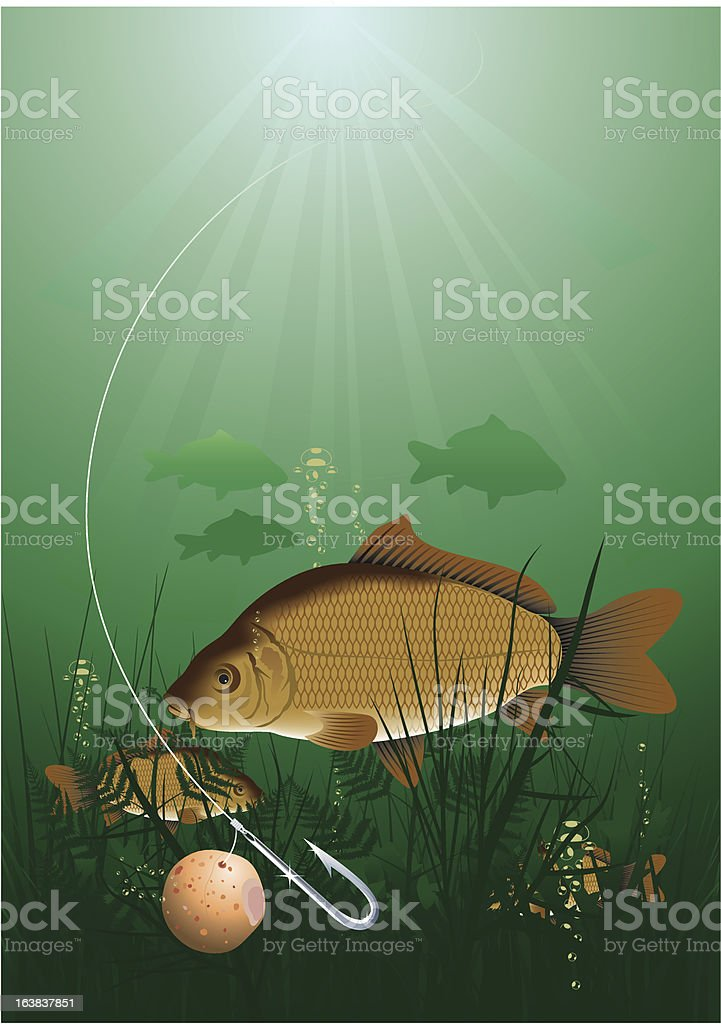 Common carp royalty-free stock vector art