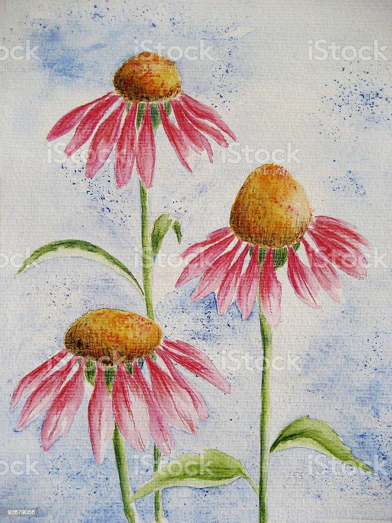 Cone Flower  - Echinacea royalty-free stock vector art