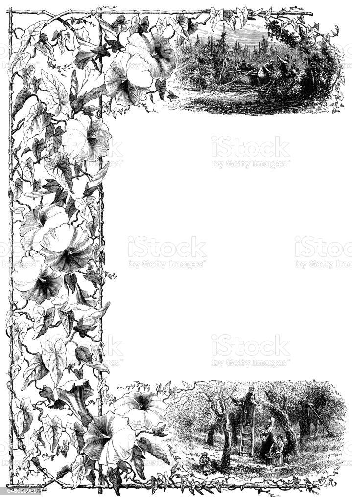 Convolvulus border - vintage engraving vector art illustration