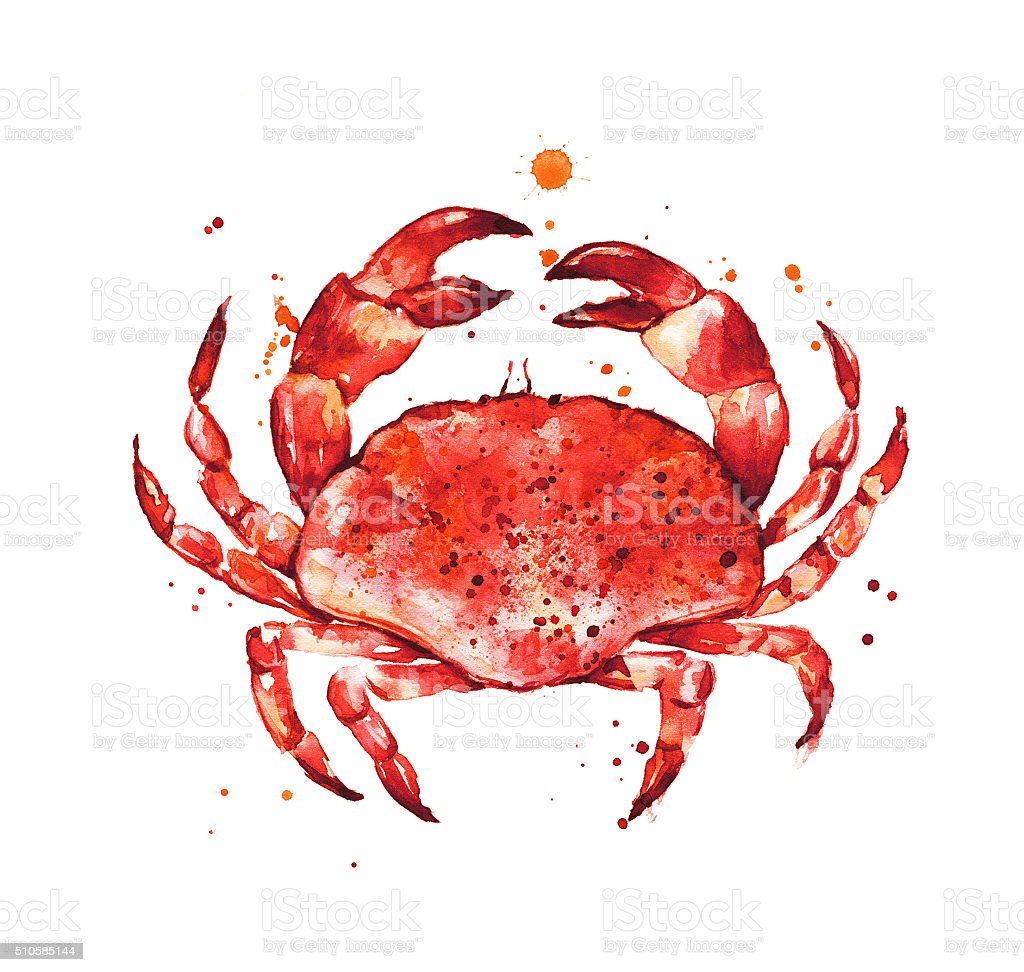Cooked crab, hand drawn seafood vector art illustration
